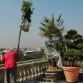 Réception des plantes sur la terrasse