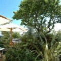 Déjeuner à l'ombre des arbres