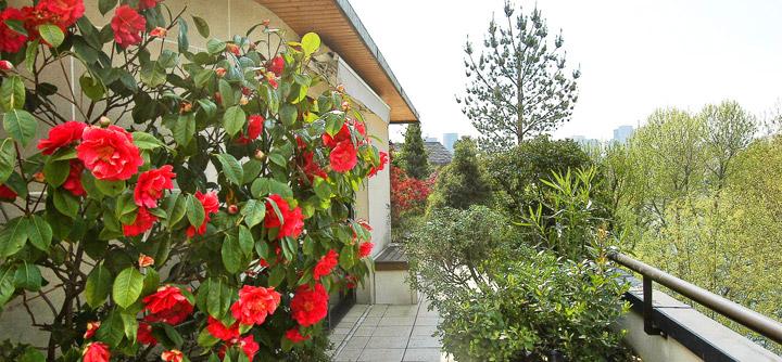 Un balcon aux parfums de roses