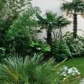Petit jardin exotique