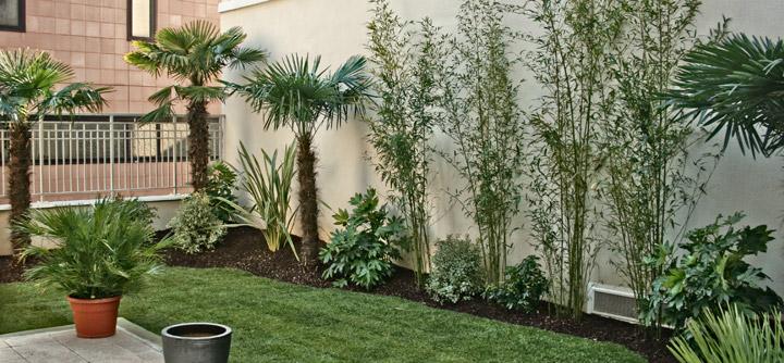 Petit jardin exotique   Terrasse Concept
