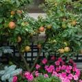 L'automne porte ses fruits en terrasse